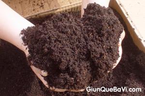 Cách dùng phân trùn quế