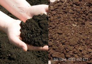 phân trùn quế vs phân bò