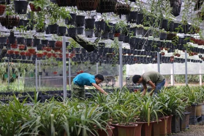 Vườn Lan sử dụng phân trùn quế ép viên